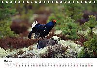 Die beeindruckende Welt der Rauhfußhühner (Tischkalender 2019 DIN A5 quer) - Produktdetailbild 5
