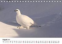 Die beeindruckende Welt der Rauhfusshühner (Tischkalender 2019 DIN A5 quer) - Produktdetailbild 8