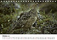 Die beeindruckende Welt der Rauhfußhühner (Tischkalender 2019 DIN A5 quer) - Produktdetailbild 10