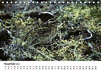 Die beeindruckende Welt der Rauhfusshühner (Tischkalender 2019 DIN A5 quer) - Produktdetailbild 11