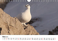Die beeindruckende Welt der Rauhfußhühner (Wandkalender 2019 DIN A4 quer) - Produktdetailbild 3