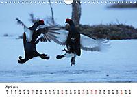 Die beeindruckende Welt der Rauhfusshühner (Wandkalender 2019 DIN A4 quer) - Produktdetailbild 4