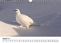 Die beeindruckende Welt der Rauhfusshühner (Wandkalender 2019 DIN A4 quer) - Produktdetailbild 8