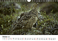 Die beeindruckende Welt der Rauhfusshühner (Wandkalender 2019 DIN A4 quer) - Produktdetailbild 10