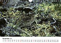 Die beeindruckende Welt der Rauhfußhühner (Wandkalender 2019 DIN A4 quer) - Produktdetailbild 11