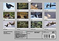 Die beeindruckende Welt der Rauhfusshühner (Wandkalender 2019 DIN A4 quer) - Produktdetailbild 13