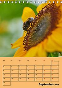 Die Biene und die Farbe gelb (Tischkalender 2019 DIN A5 hoch) - Produktdetailbild 9