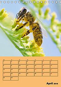 Die Biene und die Farbe gelb (Tischkalender 2019 DIN A5 hoch) - Produktdetailbild 4
