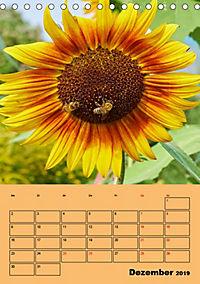 Die Biene und die Farbe gelb (Tischkalender 2019 DIN A5 hoch) - Produktdetailbild 12