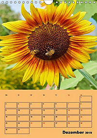 Die Biene und die Farbe gelb (Wandkalender 2019 DIN A4 hoch) - Produktdetailbild 12