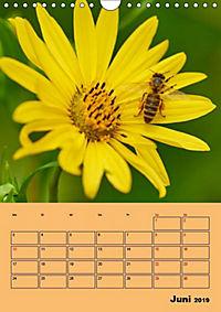 Die Biene und die Farbe gelb (Wandkalender 2019 DIN A4 hoch) - Produktdetailbild 4
