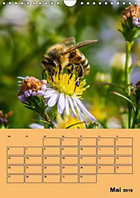 Die Biene und die Farbe gelb (Wandkalender 2019 DIN A4 hoch) - Produktdetailbild 10