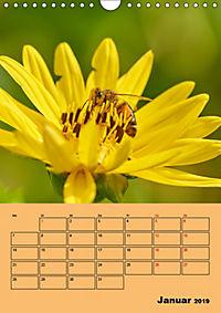 Die Biene und die Farbe gelb (Wandkalender 2019 DIN A4 hoch) - Produktdetailbild 1