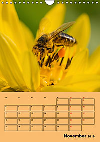 Die Biene und die Farbe gelb (Wandkalender 2019 DIN A4 hoch) - Produktdetailbild 11
