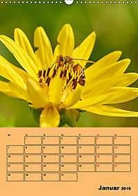 Die Biene und die Farbe gelb (Wandkalender 2019 DIN A3 hoch) - Produktdetailbild 1
