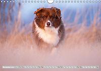 DIE BUNTE WELT DER AUSTRALIAN SHEPHERDS (Wandkalender 2019 DIN A4 quer) - Produktdetailbild 11