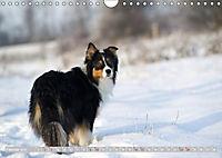 DIE BUNTE WELT DER AUSTRALIAN SHEPHERDS (Wandkalender 2019 DIN A4 quer) - Produktdetailbild 2