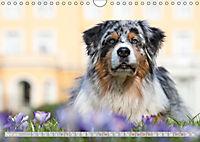 DIE BUNTE WELT DER AUSTRALIAN SHEPHERDS (Wandkalender 2019 DIN A4 quer) - Produktdetailbild 4