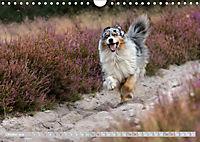DIE BUNTE WELT DER AUSTRALIAN SHEPHERDS (Wandkalender 2019 DIN A4 quer) - Produktdetailbild 10