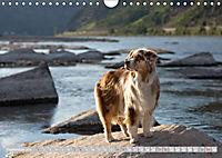 DIE BUNTE WELT DER AUSTRALIAN SHEPHERDS (Wandkalender 2019 DIN A4 quer) - Produktdetailbild 9