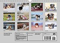 DIE BUNTE WELT DER AUSTRALIAN SHEPHERDS (Wandkalender 2019 DIN A4 quer) - Produktdetailbild 13
