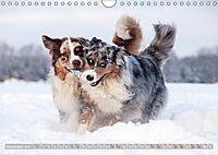 DIE BUNTE WELT DER AUSTRALIAN SHEPHERDS (Wandkalender 2019 DIN A4 quer) - Produktdetailbild 12