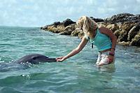 Die Delfinflüsterin - Produktdetailbild 3
