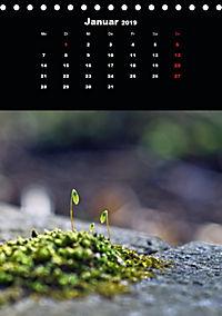 Die fantastische Welt der Moose (Tischkalender 2019 DIN A5 hoch) - Produktdetailbild 1