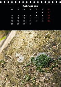 Die fantastische Welt der Moose (Tischkalender 2019 DIN A5 hoch) - Produktdetailbild 2