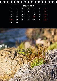 Die fantastische Welt der Moose (Tischkalender 2019 DIN A5 hoch) - Produktdetailbild 4