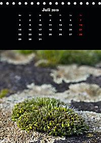 Die fantastische Welt der Moose (Tischkalender 2019 DIN A5 hoch) - Produktdetailbild 7