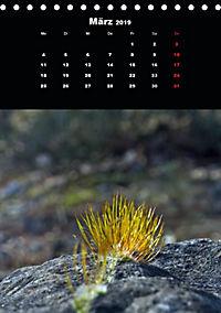 Die fantastische Welt der Moose (Tischkalender 2019 DIN A5 hoch) - Produktdetailbild 3