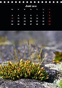 Die fantastische Welt der Moose (Tischkalender 2019 DIN A5 hoch) - Produktdetailbild 6