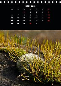 Die fantastische Welt der Moose (Tischkalender 2019 DIN A5 hoch) - Produktdetailbild 5