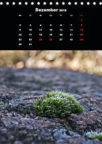 Die fantastische Welt der Moose (Tischkalender 2019 DIN A5 hoch) - Produktdetailbild 12