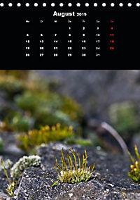 Die fantastische Welt der Moose (Tischkalender 2019 DIN A5 hoch) - Produktdetailbild 8