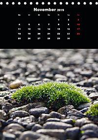 Die fantastische Welt der Moose (Tischkalender 2019 DIN A5 hoch) - Produktdetailbild 11