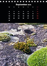 Die fantastische Welt der Moose (Tischkalender 2019 DIN A5 hoch) - Produktdetailbild 9