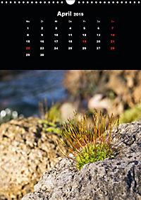Die fantastische Welt der Moose (Wandkalender 2019 DIN A3 hoch) - Produktdetailbild 4