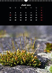 Die fantastische Welt der Moose (Wandkalender 2019 DIN A3 hoch) - Produktdetailbild 6