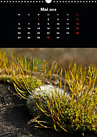 Die fantastische Welt der Moose (Wandkalender 2019 DIN A3 hoch) - Produktdetailbild 5