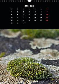 Die fantastische Welt der Moose (Wandkalender 2019 DIN A3 hoch) - Produktdetailbild 7