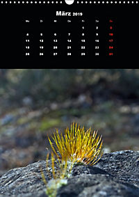 Die fantastische Welt der Moose (Wandkalender 2019 DIN A3 hoch) - Produktdetailbild 3