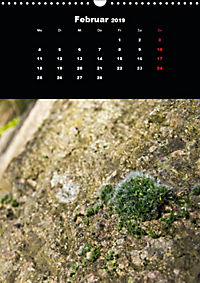 Die fantastische Welt der Moose (Wandkalender 2019 DIN A3 hoch) - Produktdetailbild 2