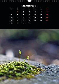 Die fantastische Welt der Moose (Wandkalender 2019 DIN A3 hoch) - Produktdetailbild 1