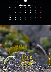 Die fantastische Welt der Moose (Wandkalender 2019 DIN A3 hoch) - Produktdetailbild 8
