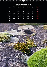 Die fantastische Welt der Moose (Wandkalender 2019 DIN A3 hoch) - Produktdetailbild 9