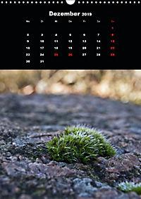 Die fantastische Welt der Moose (Wandkalender 2019 DIN A3 hoch) - Produktdetailbild 12