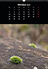 Die fantastische Welt der Moose (Wandkalender 2019 DIN A3 hoch) - Produktdetailbild 10