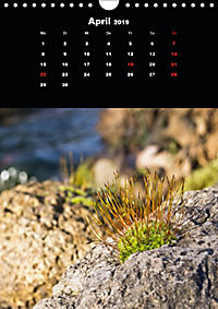 Die fantastische Welt der Moose (Wandkalender 2019 DIN A4 hoch) - Produktdetailbild 4